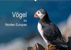 Vögel im Norden Europas (Wandkalender 2019 DIN A2 quer) von Thoma,  Martin