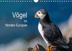 Vögel im Norden Europas (Wandkalender 2019 DIN A4 quer) von Thoma,  Martin