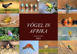 Vögel in Afrika – Magie der Farben (Wandkalender 2021 DIN A2 quer) von Herzog,  Michael