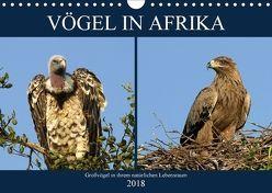 Vögel in Afrika (Wandkalender 2018 DIN A4 quer) von Herzog,  Michael