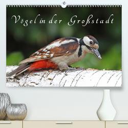 Vögel in der Großstadt (Premium, hochwertiger DIN A2 Wandkalender 2020, Kunstdruck in Hochglanz) von Konieczka,  Klaus