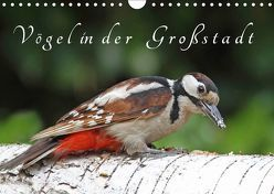 Vögel in der Großstadt (Wandkalender 2019 DIN A4 quer) von Konieczka,  Klaus
