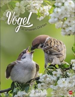Vögel in unseren Gärten Posterkalender 2022 von Heye