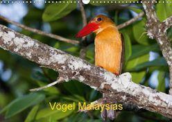 Vögel Malaysias – Birds of Malaysia (Wandkalender 2018 DIN A3 quer) von D. Weinand,  Ralf