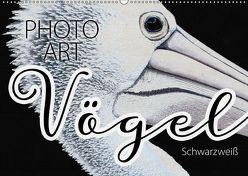 Vögel Schwarzweiß Photo Art (Wandkalender 2019 DIN A2 quer) von Sachers,  Susanne