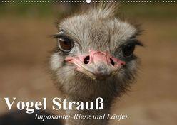 Vogel Strauß. Imposanter Riese und Läufer (Wandkalender 2019 DIN A2 quer) von Stanzer,  Elisabeth