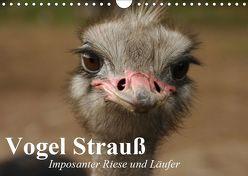 Vogel Strauß. Imposanter Riese und Läufer (Wandkalender 2019 DIN A4 quer) von Stanzer,  Elisabeth