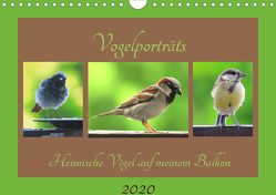 Vogelporträts – Heimische Vögel auf meinem Balkon (Wandkalender 2020 DIN A4 quer) von Schimmack,  Claudia