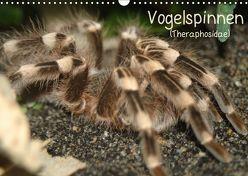 Vogelspinnen (Theraphosidae)CH-Version (Wandkalender 2019 DIN A3 quer) von Mielewczyk,  Barbara