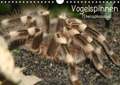 Vogelspinnen (Theraphosidae)CH-Version (Wandkalender 2019 DIN A4 quer) von Mielewczyk,  Barbara
