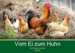 Vom Ei zum Huhn. Die Entwicklung von Küken (Wandkalender 2019 DIN A3 quer) von Hurley,  Rose