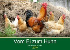 Vom Ei zum Huhn. Die Entwicklung von Küken (Wandkalender 2019 DIN A4 quer) von Hurley,  Rose