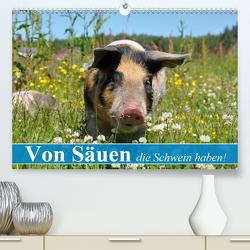 Von Säuen die Schwein haben! (Premium, hochwertiger DIN A2 Wandkalender 2020, Kunstdruck in Hochglanz) von Stanzer,  Elisabeth