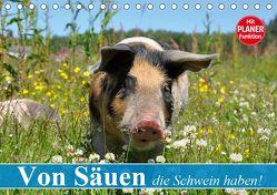 Von Säuen die Schwein haben! (Tischkalender 2020 DIN A5 quer) von Stanzer,  Elisabeth