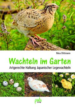 Wachteln im Garten von Dittmann,  Nina