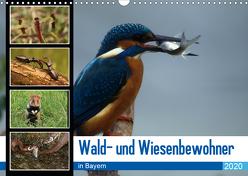 Wald- und Wiesenbewohner in Bayern 2020 (Wandkalender 2020 DIN A3 quer) von Erlwein,  Winfried