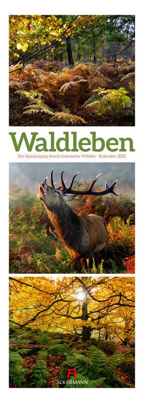 Waldleben – Ein Spaziergang durch heimische Wälder, Triplet-Kalender 2021