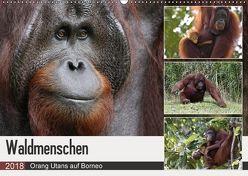 Waldmenschen – Orang Utans auf Borneo (Wandkalender 2018 DIN A2 quer) von Herzog,  Michael