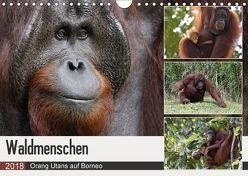 Waldmenschen – Orang Utans auf Borneo (Wandkalender 2018 DIN A4 quer) von Herzog,  Michael