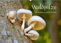 Waldpilze – Gut versteckt und doch entdeckt (Wandkalender 2019 DIN A2 quer) von LianeM