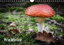 Waldpilze (Wandkalender 2019 DIN A4 quer) von Schwind,  Thomas