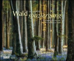 Waldspaziergang 2020 – Fotokunst-Kalender – Querformat 58,4 x 48,5 cm – Spiralbindung von de Goor,  Lars van, DUMONT Kalenderverlag