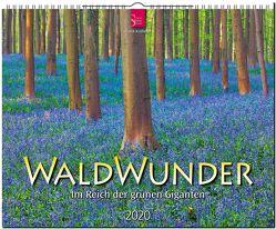 WaldWunder – Im Reich der grünen Giganten von Krahmer,  Frank