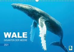 Wale: Giganten der Meere (Wandkalender 2021 DIN A3 quer) von CALVENDO