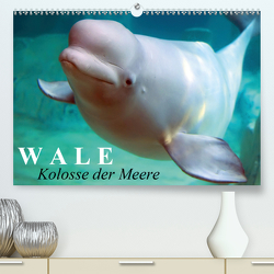 Wale – Kolosse der Meere (Premium, hochwertiger DIN A2 Wandkalender 2021, Kunstdruck in Hochglanz) von Stanzer,  Elisabeth