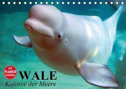 Wale. Kolosse der Meere (Tischkalender 2019 DIN A5 quer) von Stanzer,  Elisabeth