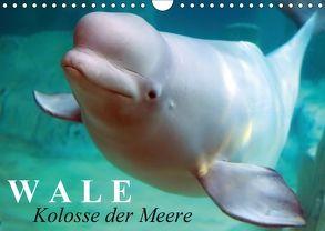 Wale – Kolosse der Meere (Wandkalender 2018 DIN A4 quer) von Stanzer,  Elisabeth