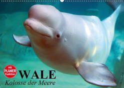 Wale. Kolosse der Meere (Wandkalender 2019 DIN A2 quer) von Stanzer,  Elisabeth