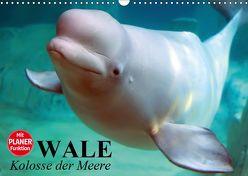 Wale. Kolosse der Meere (Wandkalender 2019 DIN A3 quer) von Stanzer,  Elisabeth