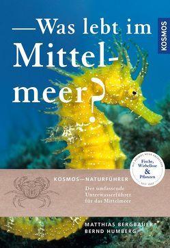 Was lebt im Mittelmeer? von Bergbauer,  Matthias, Humberg,  Bernd