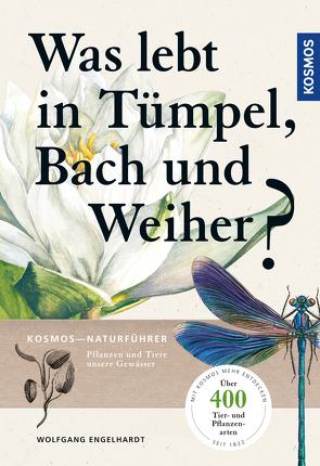 Was lebt in Tümpel, Bach und Weiher? von Engelhardt,  Wolfgang, Martin,  Peter, Rehfeld,  Klaus
