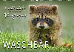 Waschbär – Niedlicher Allesfresser (Wandkalender 2018 DIN A2 quer) von Roder,  Peter