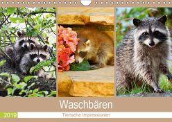 Waschbären 2019. Tierische Impressionen (Wandkalender 2019 DIN A4 quer) von Lehmann (Hrsg.),  Steffani