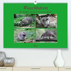Waschbären – Die Räuber mit der schwarzen Maske (Premium, hochwertiger DIN A2 Wandkalender 2021, Kunstdruck in Hochglanz) von Klatt,  Arno