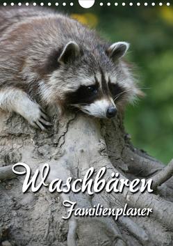Waschbären Familienplaner (Wandkalender 2021 DIN A4 hoch) von Berg,  Martina