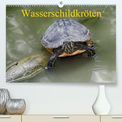 Wasserschildkröten (Premium, hochwertiger DIN A2 Wandkalender 2020, Kunstdruck in Hochglanz) von Kretschmann,  Klaudia