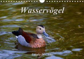 Wasservögel (Wandkalender 2018 DIN A4 quer) von Di Chito,  Ursula