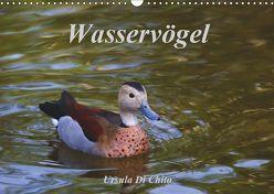 Wasservögel (Wandkalender 2019 DIN A3 quer) von Di Chito,  Ursula