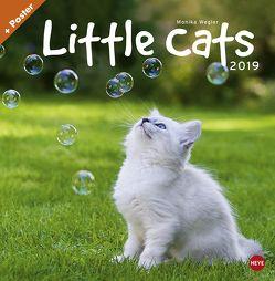 Wegler Little Cats Broschurkalender – Kalender 2019 von Heye, Wegler,  Monika
