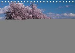 Weinland Pfalz – Region Südliche Weinstraße (Tischkalender 2019 DIN A5 quer)
