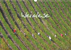 Weinlese (Wandkalender 2021 DIN A3 quer) von v.d. Lese,  Hans