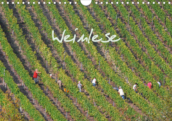 Weinlese (Wandkalender 2021 DIN A4 quer) von v.d. Lese,  Hans