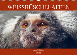 Weissbüschelaffen – kleine Wildfänge (Wandkalender 2021 DIN A2 quer) von Brunner-Klaus,  Liselotte