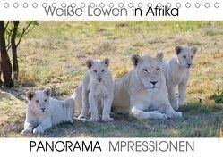 Weiße Löwen in Afrika PANORAMA IMPRESSIONEN (Tischkalender 2019 DIN A5 quer) von Fraatz,  Barbara