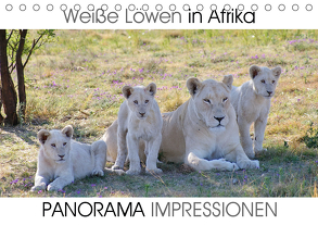 Weiße Löwen in Afrika PANORAMA IMPRESSIONEN (Tischkalender 2020 DIN A5 quer) von Fraatz,  Barbara