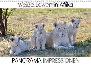 Weiße Löwen in Afrika PANORAMA IMPRESSIONEN (Wandkalender 2020 DIN A3 quer) von Fraatz,  Barbara